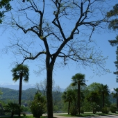 Parque Beaumont