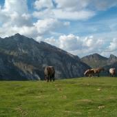 Chevaux au dessus du Col de Soulor