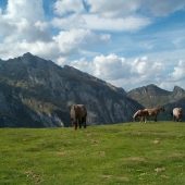 Horses in the Soulor pass